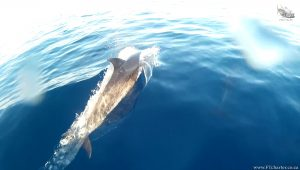 fish tales charters dolphin