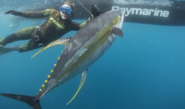 Spearo Yellowfin Tuna