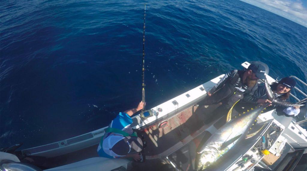 Top View Tuna