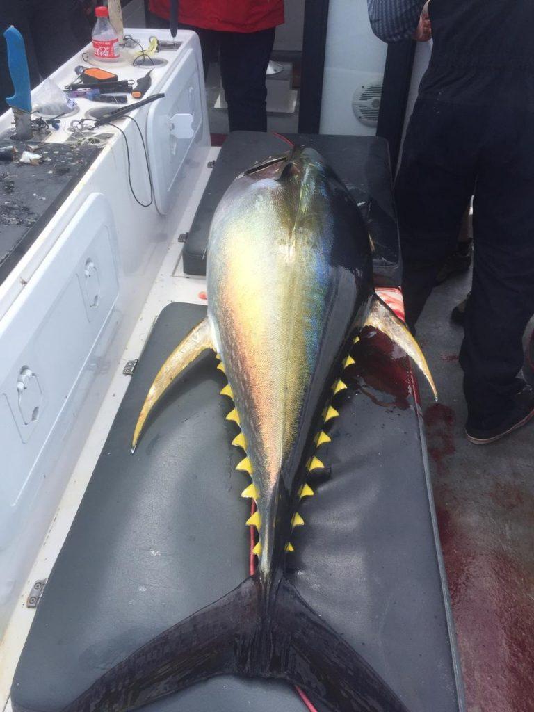 Beautiful Tuna Fish