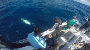 Showing Colour Yellowfin Tuna